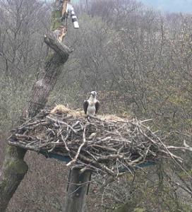vlcsnap-2014-04-03-10h56m39s27
