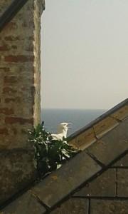 Cornwall Holiday nest