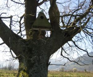 owlbox BassNNR